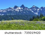 Small photo of American Bistort Lupine Wildflowers Tatoosh Range Snow Mountains Paradise Mount Rainier National Park Washington Snow Mountain