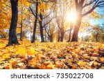 Bright Foliage In Sunny Autumn...