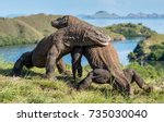 the fighting of komodo dragons  ... | Shutterstock . vector #735030040