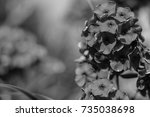 flowers in the garden by day | Shutterstock . vector #735038698