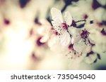 spring flowers background ... | Shutterstock . vector #735045040