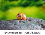 Snails   Polymita Picta Or...