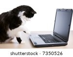 Stock photo cat uses a laptop computer 7350526