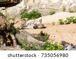 striped hyena rests after night ... | Shutterstock . vector #735056980