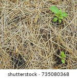 organic planting in straw bales