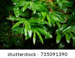 green leaf with water drops. | Shutterstock . vector #735091390