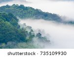 Small photo of Distant scenic view / scene of evanescent atmosphere in the evergreen forest and tree wrapped / covered in fresh morning mist. Tall green trees with dense morning fog rolling in over lush wilderness.