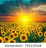 sunflower fields during sunset. ... | Shutterstock . vector #735115318