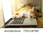 Stock photo cat sleeping over a laptop on wooden desk with sunrise background 735118780