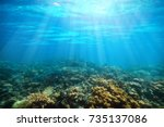 Underwater Coral Reef On The...