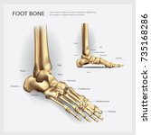 foot bone anatomy vector... | Shutterstock .eps vector #735168286