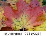 maple leaf  autumn maple ... | Shutterstock . vector #735193294
