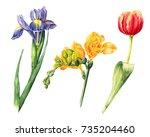 hand drawn iris  fleur de lis... | Shutterstock . vector #735204460