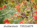 Bird Fieldfare Sitting On The...