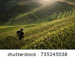 Rice Paddy Fields Prepare The...
