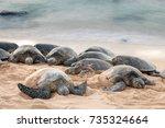 green sea turtles having a
