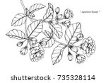 hand drawing and sketch jasmine ... | Shutterstock .eps vector #735328114