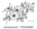 hand drawing and sketch rosa... | Shutterstock .eps vector #735328384