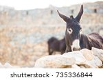 Funny Donkey On Road In...