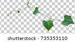 Vine plant growing green leaves ...
