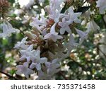 flowers in the garden | Shutterstock . vector #735371458