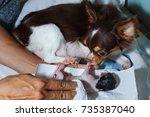 dog birth newborn birthing ...   Shutterstock . vector #735387040