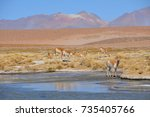 landscape with vicunas at the... | Shutterstock . vector #735405766