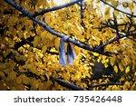 Small photo of Wish tree