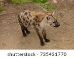 spotted hyena  | Shutterstock . vector #735431770