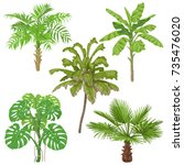 tropical plants set. palm trees ... | Shutterstock .eps vector #735476020