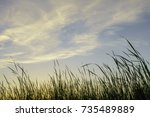wispy clouds high above tall... | Shutterstock . vector #735489889
