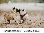 dog | Shutterstock . vector #735525568
