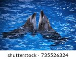 pair of dolphins swimming in... | Shutterstock . vector #735526324