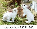three young rabbits in farm cote | Shutterstock . vector #735561208