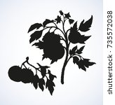 big tomato on twig isolated on... | Shutterstock .eps vector #735572038