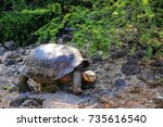 galapagos giant tortoise at... | Shutterstock . vector #735616540