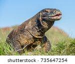 the komodo dragon   varanus... | Shutterstock . vector #735647254