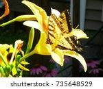 Golden Yellow Monarch Butterfly ...