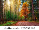 autumn colorful forest on sunny ... | Shutterstock . vector #735654148