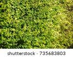 leaves blurred | Shutterstock . vector #735683803
