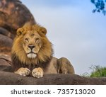 Stock photo male lion 735713020