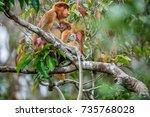 Proboscis Monkey Baby Sucks It...