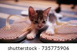 Stock photo adopt don t shop concept kittens 735775906