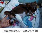 dog birth newborn birthing ...   Shutterstock . vector #735797518
