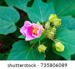 flower | Shutterstock . vector #735806089