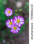 flower | Shutterstock . vector #735806110