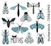 hand drawn doodle moth vector... | Shutterstock .eps vector #735816943