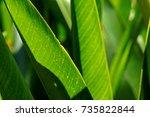 green leaf on light | Shutterstock . vector #735822844