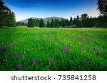 krkonose mountain  flowered... | Shutterstock . vector #735841258