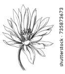 white waterlily lake flower... | Shutterstock . vector #735873673